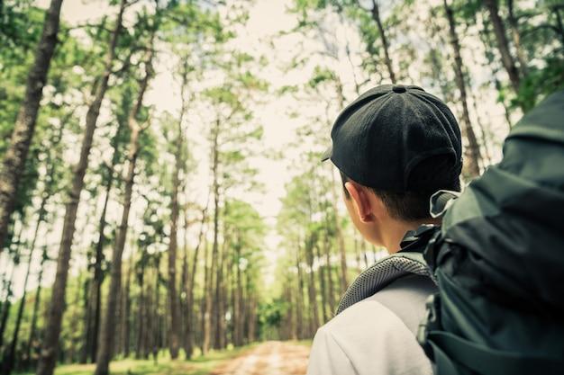Asiatischer mann, der im kiefernwald am sonnigen tag wandert