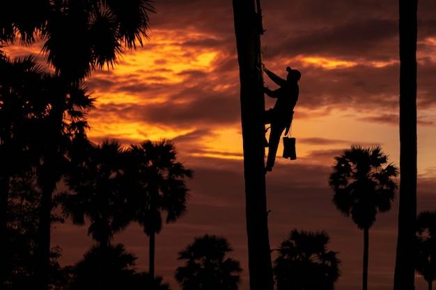 Asiatischer mannindonesien-landwirt, der im reis firld arbeitet. halten sie tan palmzucker bär viel am morgen ist sonnenaufgang.