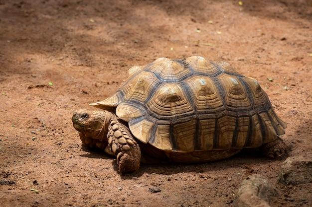 Asiatischer riese und galapagos-schildkröte leben im boden