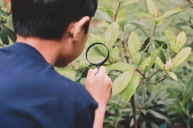 Asiatischer schuljunge, der blätter unter verwendung von lupen untersucht