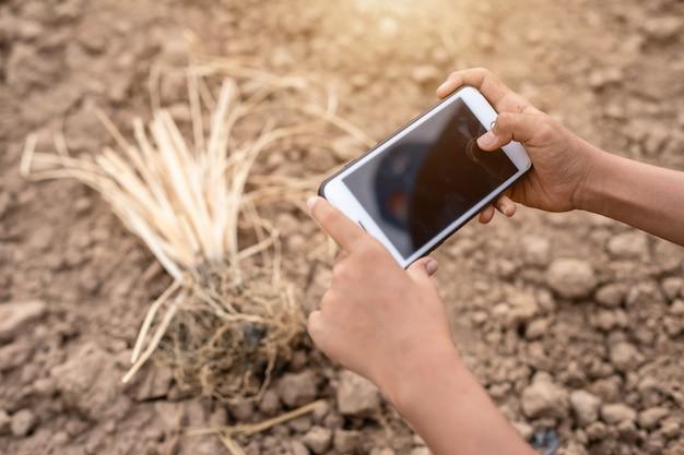 Asiatischer student, der forschung tut oder trockenen boden im leeren land auf dem pflanzen überprüft