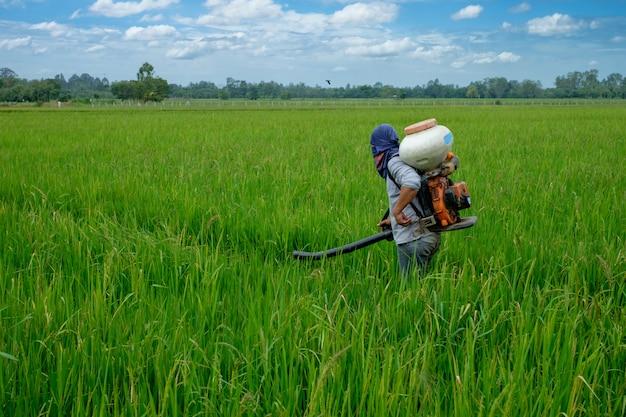 Asiatischer thailändischer landwirt zu herbiziden oder chemischen düngemitteln auf den feldern
