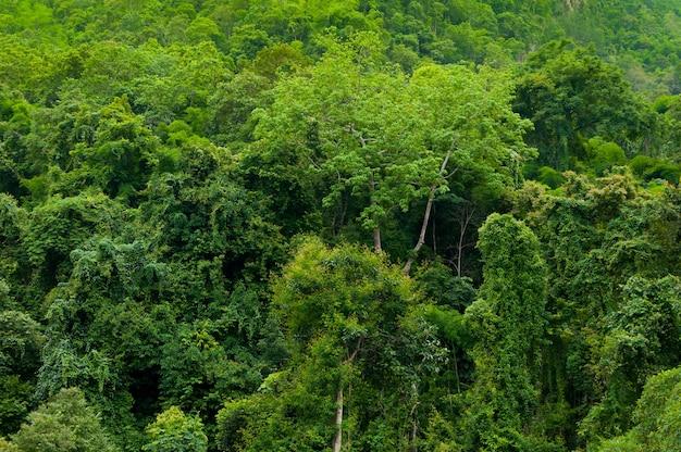 Asiatischer tropischer regenwald