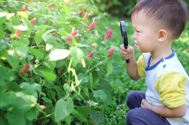 Asiatisches 2 - 3 jahre altes kleinkindjungenkind, das umwelt durch erkundung durch eine lupe am sonnigen tag erforscht