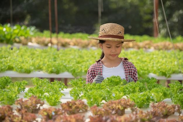 Asiatisches kind, das hydrokultur hält. kleines mädchen in einem gewächshaus, das gemüse erntet. kind mit salat.hydroponischer hausanpflanzung und landwirtschaft. junge weibliche gartenarbeit blattgemüse.landwirtschaft.
