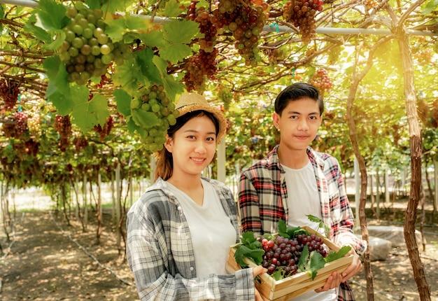 Asien bauer mann und frau ernten trauben im weinberg mit holzkiste gesundes bio-obstkonzept