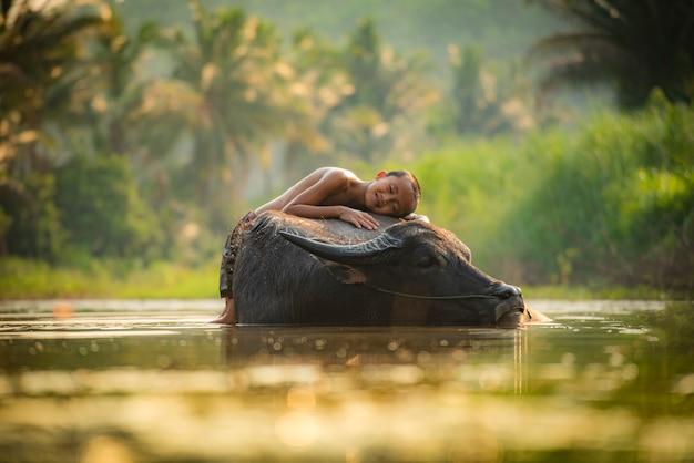 Asien-kinderschlaf auf dem glücklichen büffeljungen und lächeln geben liebestierbüffelwasser auf fluss