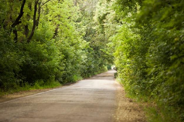 Asphalt kurvenreiche straße in einem buchengrünwald