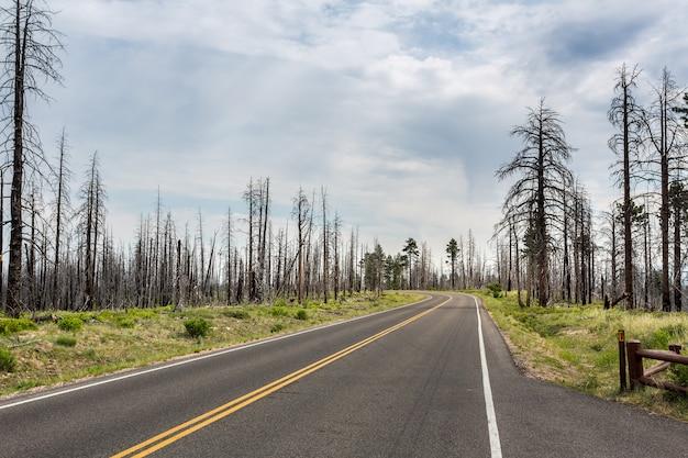 Asphaltstraße durch totholz