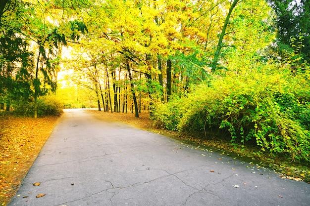 Asphaltstraße im park mit bunten blättern