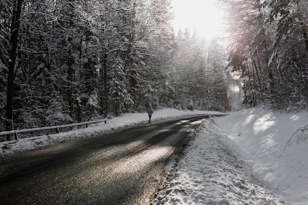 Asphaltstraße im tannenwald im winter