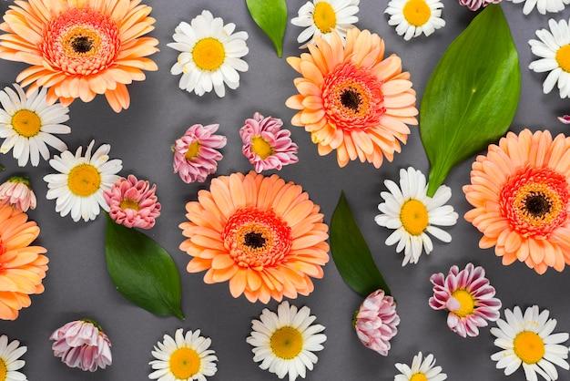 Assorted blütenköpfe und blätter Kostenlose Fotos