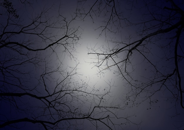 Ast gegen nachthimmel