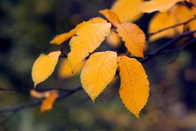 Ast mit gelben blättern im herbstwald in hellen warmen herbsttönen