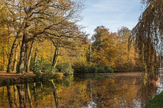 Atemberaubende aufnahme eines sees mitten in einem park voller bäume