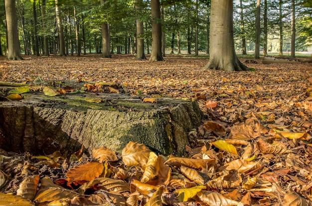 Atemberaubende aufnahme eines waldes bedeckt mit trockenen blättern, umgeben von bäumen in der herbstsaison
