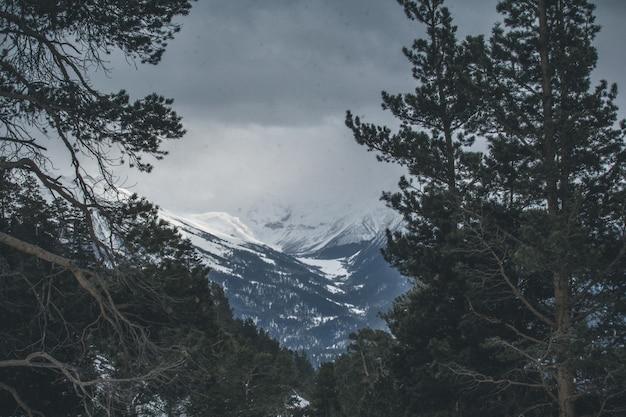 Atemberaubende aussicht auf die berge durch die nadelbäume stimmung der ruhe und gelassenheit
