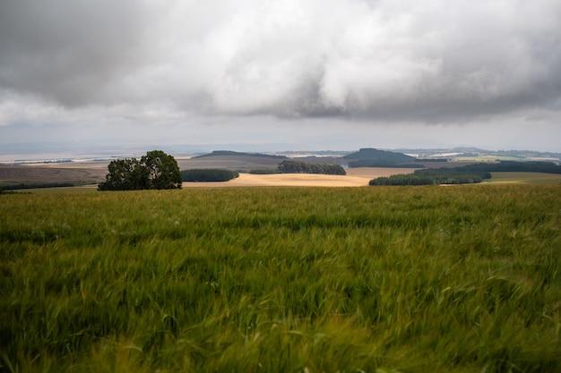 Atemberaubende aussicht auf die grasfelder unter dem bewölkten himmel in mount kenya