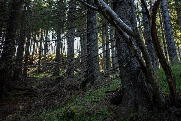 Atemberaubende aussicht auf einen atemberaubenden wald mit vielen bäumen