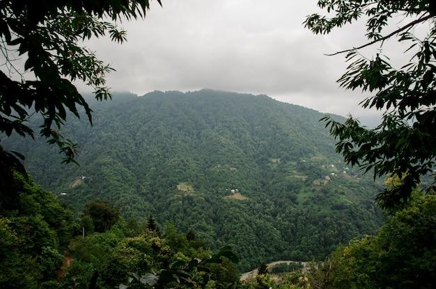 Atemberaubende landschaft der berge bedeckt mit grünem baumwald im nebel im vordergrund von niederlassungen