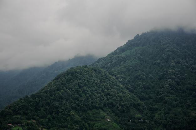 Atemberaubende landschaft der berge bedeckt mit grünem baumwald im nebel