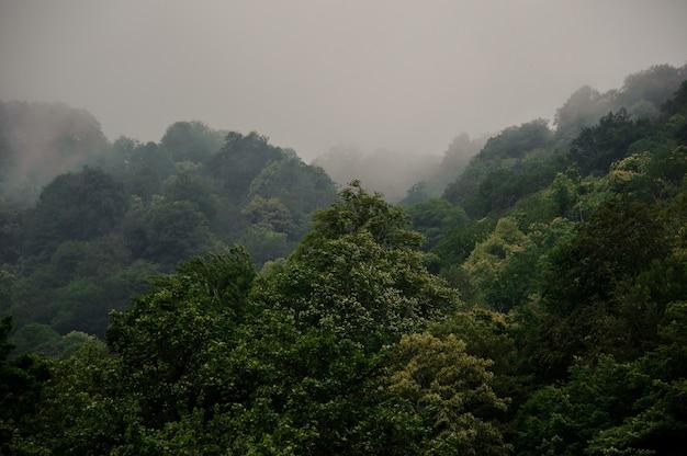 Atemberaubende landschaft des grünen baumwaldes bedeckt durch den nebel
