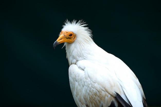 Atemberaubendes vogelporträt in wilder natur