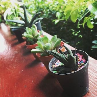 Atmosphäre-grünpflanze-natürliches konzept