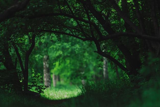 Atmosphärische dunkelgrüne landschaft mit ausgefallenen ästen. dunkler waldvegetationstunnel. sonnige wiese hinter bäumen. licht auf lichtung hinter der dunkelheit des waldes.