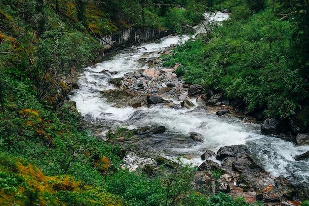 Atmosphärische grüne waldlandschaft mit gebirgsbach im felsigen tal.