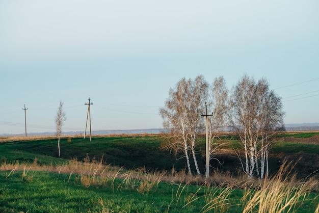 Atmosphärische landschaft mit stromleitungen auf dem grünen gebiet mit straße und bäumen unter blauem himmel. hintergrund der elektrischen pfosten mit copyspace. hochspannungsleitungen über der erde. elektrizitätswirtschaft
