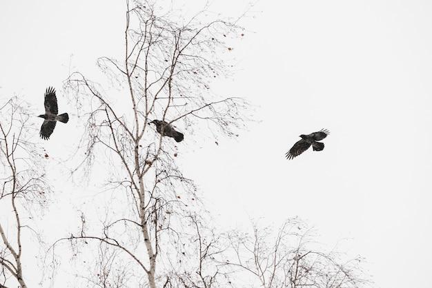 Atmosphärische winterlandschaft mit drei schwarzen raben fliegt über bäumen