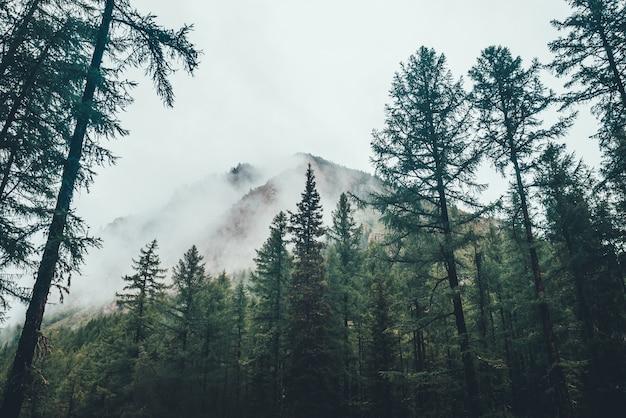 Atmosphärischer gespenstischer dunkler wald im dichten nebel zwischen großen bergen