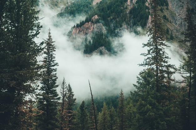 Atmosphärischer gespenstischer dunkler wald im dichten nebel zwischen großen felsen. düstere neblige landschaft mit felsigem berg hinter nadelbäumen in niedrigen wolken. alpenlandschaft am frühen morgen. hipster, vintage-töne.