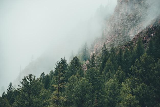 Atmosphärischer gespenstischer dunkler wald im dichten nebel zwischen großen felsen.