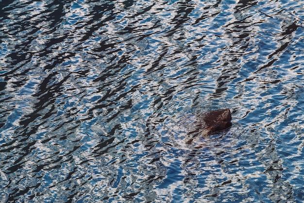 Atmosphärischer kontrastreicher hintergrund mit nassem flussstein im glänzenden wasser.