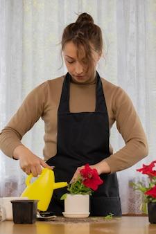 Attraktives positives freudiges mädchen, das petunienblume mit dose nach dem pflanzen wässert