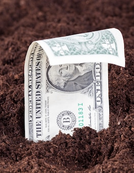 Auf dem feld für landwirtschaftliche kulturpflanzen, einem europäischen territorium mit ausländischem geld, einen us-dollar aus dem boden herausragen oder aus dem boden wachsen