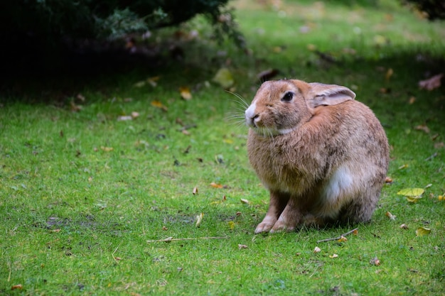 Auf dem grünen gras sitzt ein großer hase oder hase