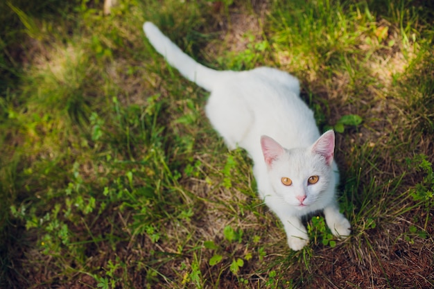 Auf dem rücken liegende katze genießt sonnenschein im park