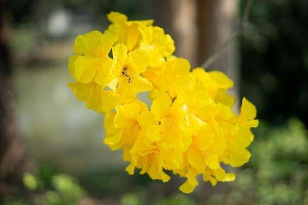 Auf dem zweig wachsen gelbe blumen. es gibt ameisen und bienen in pollenkörnern.