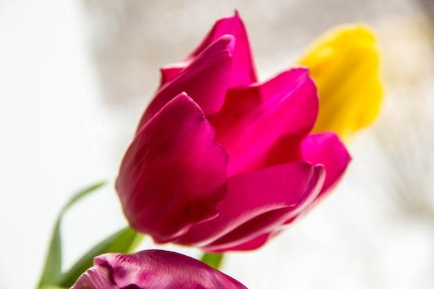 Auf der fensterbank liegt ein strauß gelber und rosafarbener tulpen. ein geschenk von blumen am fenster.