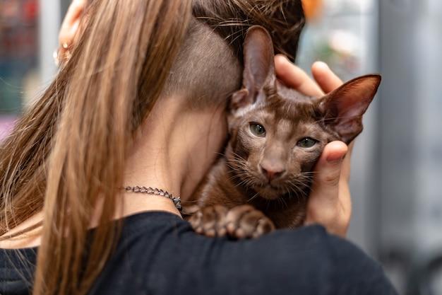 Auf der schulter des mädchens liegt ein orientalisch kurzhaar-kätzchen mit einem schoko-wollton. eine frau umarmt sanft ihr geliebtes haustier.