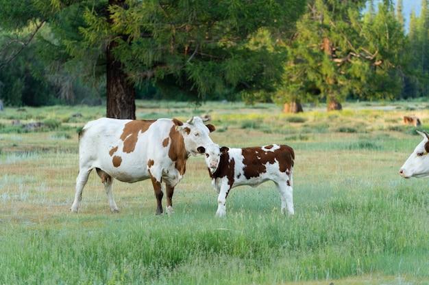 Auf der wiese neben dem wald stehen eine kuh und ein kalb