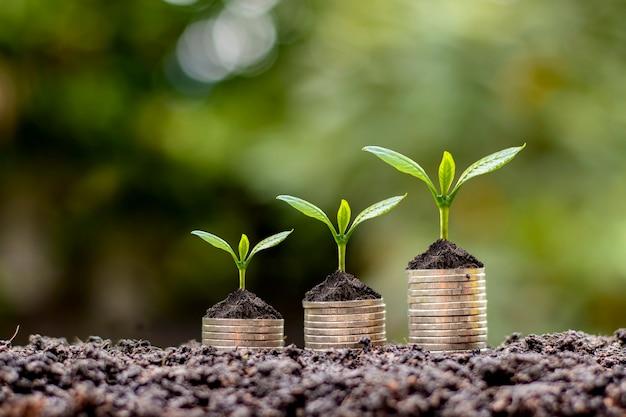 Auf einem haufen münzen werden münzen und pflanzen für finanzen und banken gezüchtet. die idee, geld zu sparen und die finanzen zu erhöhen.