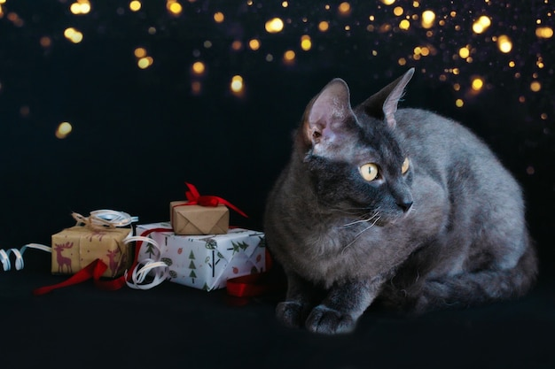 Auf einem schwarzen hintergrund sitzt eine graue katze und weihnachtsgeschenke sind in geschenkpapier verpackt und mit bändern und seilen gebunden. vorbereitung auf das neue jahr