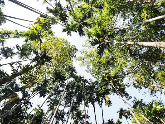 Aufblicken auf palmen vor dem hintergrund des blauen himmels.