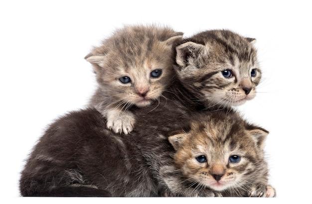Aufeinander liegende kätzchen