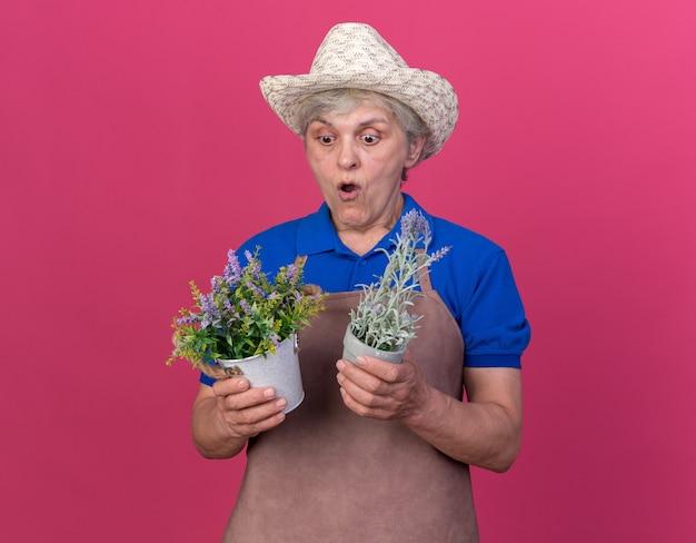 Aufgeregte ältere gärtnerin mit gartenhut, die blumentöpfe hält und betrachtet, die auf rosa wand mit kopienraum isoliert sind