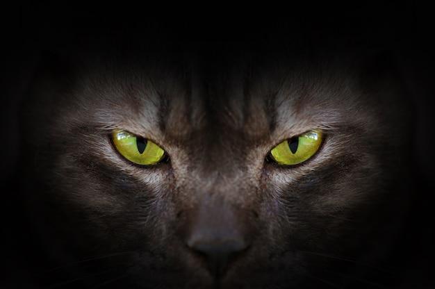 Augen der schwarzen katze im dunklen